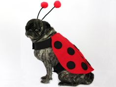 DIY Ladybug Halloween Costume for Dogs >> http://www.diynetwork.com/decorating/how-to-make-a-ladybug-halloween-costume-for-a-dog/pictures/index.html?soc=pinterest