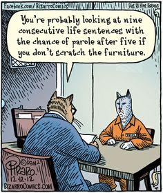Funny Cat  Consecutive Life Sentences
