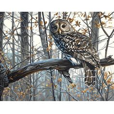 Dimensions Paint Works 'Wise Owl' Paint By Number Kit
