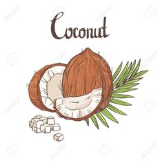 Illustration of Coconut background. vector art, clipart and stock vectors. Royal Clan, Leaves Doodle, Coconut Leaves, Travel Journals, Retro Ads, Soap Packaging, Cool Wallpaper, Tattos, Bujo