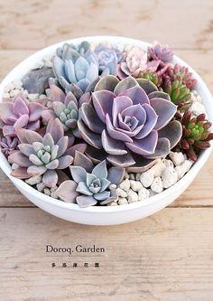 Succulents for garden decoration Cactus arrangements Cactus y Suculentas