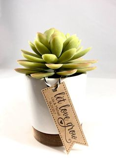 Succulent Let Love Grow Wedding Favor Tags Thank You Favors Plant Favors Rustic Wedding Favors Flower Seed Favors Set of 18 Plant Wedding Favors, Creative Wedding Favors, Rustic Wedding Favors, Wedding Favors For Guests, Wedding Favor Tags, Wedding Ideas, Wedding Inspiration, Diy Wedding, Wedding Reception