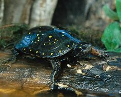 When is World Turtle Day? The official date for World Turtle Day is May 23.