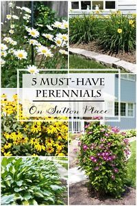 Must-Have Perennials | On Sutton Place