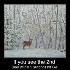 Do you see it deer in tree
