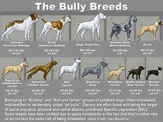 Bully breed chart