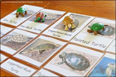 Free Types of Turtle Cards and Venn Diagram (post contains 10+ ideas for learning about Turtles) from Suzie's Home Education Ideas