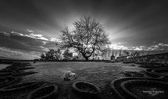 Dying Light #portugal #portugaldenorteasul #portugal_em_fotos #portugal_de_sonho #portugalframes #portugal_lovers #chaves #pretoebranco #blackandwhite #tree #garden #sunset