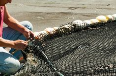 Mending a fishing net Geisha Book, St Luke, Speak Life, The Fool, Fishing, Peaches, Pisces, Gone Fishing