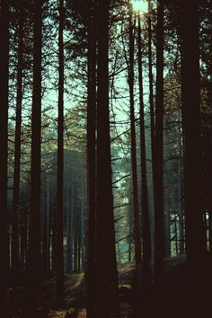 I want to go hide in the woods for a few days and forget about the real world.