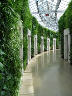 This is the living wall that was recently installed at the Conservatory of Longwood. All of the doors lead to individual bathrooms. The wall was incredibly lush and beautiful and I spent a long time talking to a man who was in charge of the maintenance. He told me that it takes 16 days to work from one end of the wall to the other, weeding, cutting back, and dead heading (taking off all flowers so it retains the intensity of solid green!) and then he starts again.
