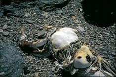 George Mallory died in 1924 and was the first to make an attempt to reach the summit of the world's highest mountain.  His body, still perfectly preserved, was identified in 1999.