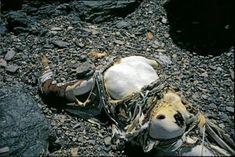 Muertos en el Everest. Cadaver de George Mallory.