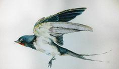 Swallow watercolor passe partout frame bird portrait