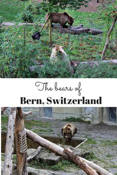 Did you know there is a pit full of bears right in the middle of #Bern, #Switzerland?! Click for details! #travel