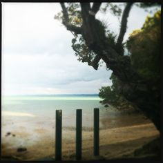 Jenkins Bay, Titirangi, Auckland.  July 2013.  Photo by N Noble
