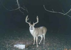 Man, it's tough to beat width and length with these tines. Wow! - See more at: http://www.deeranddeerhunting.com/featured/cool-trail-camera-whitetails?pid=11171#sthash.WHs3VQ1j.dpuf