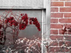 Berries on bricks