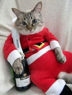 Pin by ginger on animals: cats Silly Cats, Cute Cats And Kittens, Crazy Cats, Funny Cats, Christmas Kitten, Christmas Animals, Merry Christmas, Cute Baby Animals, Funny Animals