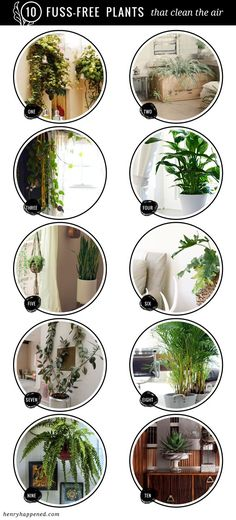 10 Fuss Free House Plants That Clean the Air | Gardening Tips