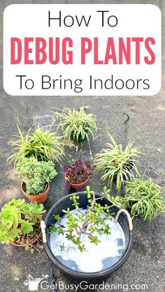 Debugging And Cleaning Potted Plants Before Bringing Them Back Inside Is Crucial. Pursue These Easy Steps To Bring Outdoor Plants Inside Without Bugs. Indoor Vegetable Gardening, Home Vegetable Garden, Organic Gardening, Gardening Tips, Gardening Gloves, Kitchen Gardening, Fairy Gardening, Gardening Services, Gardening Books