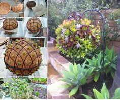 How to make hanging succulent Ball for a fabulous garden design. Nice along the pathway and fence. love it. #diy, #gardening