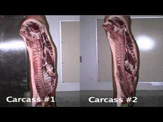 Beef carcass eval & reasons.