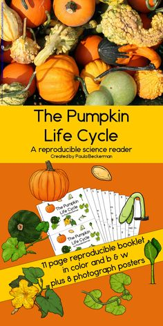 The Pumpkin Life Cycle Preschool Science, Science Activities, Science Ideas, Reading Practice, Guided Reading, Teaching Plants, Pumpkin Life Cycle, Second Grade, Grade 1