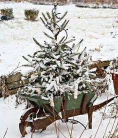 I love this idea for my yard next winter.