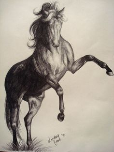 rearing horse drawing | pencil rearing horse by peabluejr traditional art drawings animals ...