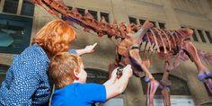"""ScopifyROM - One App. Many Ways to See.  Esta app del Royal Ontario Museum me parece interesante porque juega con las inquietudes que nos quedan a tod@s sobre """"la vida"""" de las piezas antiguas de un museo de historia natural."""