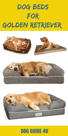 Dog Beds for Golden Retrievers #dog #dogbed #dogguide4u