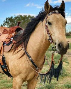 This horse makes me want to ride, now! (22) I Love Horses - Photos