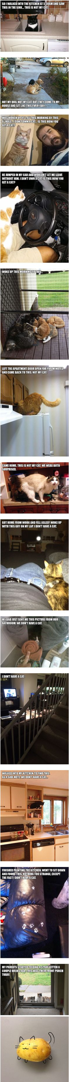 """The Best """"I Don't Own a Cat"""" Moments"""