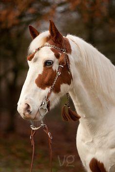 #Horse #Paint = one beautiful paint