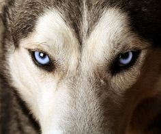 Olhos azuis! Those eyes!!!!