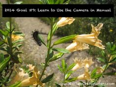 Goal Learn to Use Camera in Manual Used Cameras, Manual, Sisters, Diy Projects, Study, Goals, Crafty, Learning, Plants