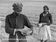 +~+~ Vintage Photograph ~+~+     African American women working in the fields planting corn.  North Carolina 1941