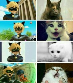 Miraculous Ladybug and Cat Noir Found at www.miraculouslad - Yassssss Meme - Miraculous Ladybug and Cat Noir Found at www.miraculouslad The post Miraculous Ladybug and Cat Noir Found at www.miraculouslad appeared first on Gag Dad. Ladybug E Catnoir, Ladybug And Cat Noir, Bugaboo, Lady Bug, Meme Chat, Marinette E Adrien, Film Anime, Catty Noir, Miraculous Ladybug Fan Art