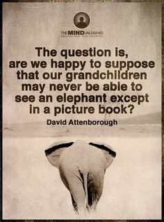 """""""The question is, are we happy to suppose that our grandchildren may never be able to see an elephant except in a picture book?"""" - David Attenborough"""