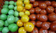 A colorful palate of our tomatoes, fresh out of the greenhouses! Greenhouse Tomatoes, Greenhouses, Colorful, Fresh, Vegetables, Food, Green Houses, Glass House, Essen
