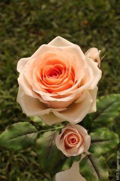 """Роза из полимерной глины """"Персидское утро"""" - кремовый,персиковая роза"""