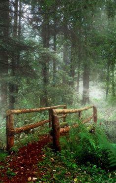 Mystical Forest.. Ireland