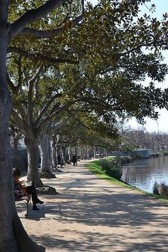 Yarra River Pathway, Melbourne Australia I intend to run this! Melbourne Victoria, Victoria Australia, Western Australia, Australia Travel, Sydney, Melbourne Australia, Places To See, Rooftop, Beautiful Places