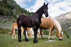 Horse - Bing Images