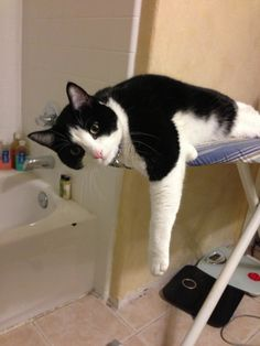 Ironing. White Cats, Cat Life, Cool Cats, Cats And Kittens, Black And White, Cool Stuff, Nice, Amazing, Dogs