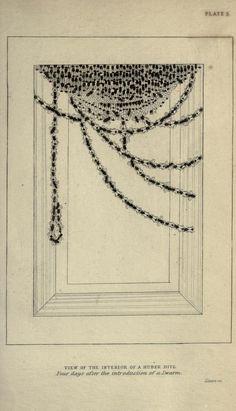 1846?? Entomology the Naturalist's Library - v.6 Entomology - by James Duncan, 1804-1861