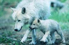 Afbeeldingsresultaat voor animals and their moms