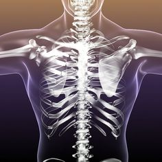 Anatomy Bones, Skull Anatomy, Human Anatomy, Skeleton Body Parts, Human Skeleton, Human Body Bones, Abc Wall, 3d Human, Medical Symbols