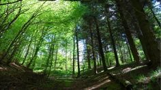 Skirrid Fawr walk, a moutain of mud and myths http://www.nationaltrust.org.uk/article-1356404082176/  Of the 7 hills that surround Abergavenny, this offers the most rewarding walk for children. Head through the woods, and follow the mountain's spine to the ruined chapel on a summit.  Length: 3.5 miles (6km) Time: 2.5 hours  The time flies with an i-angel hip seat carrier that distributes the weight between the shoulders and waist. www.dinkydragon.co.uk